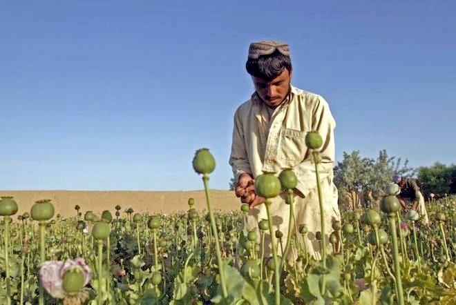 Illicit cultivation of Poppy and Narcotics, a big revenue source for Taliban