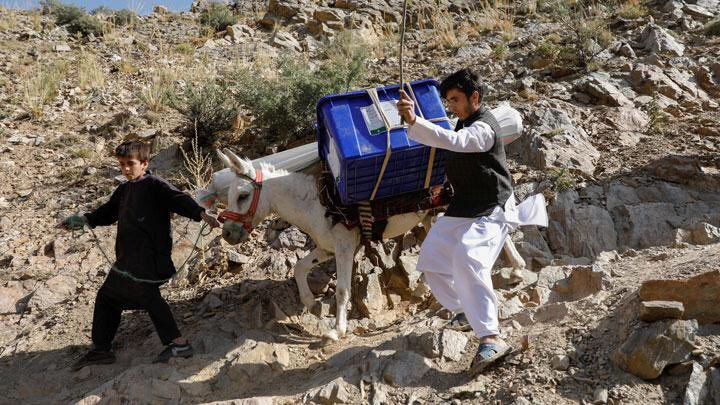 Donkeys were used to carry the ballot boxes to the remote polling stations not accessible by roads.