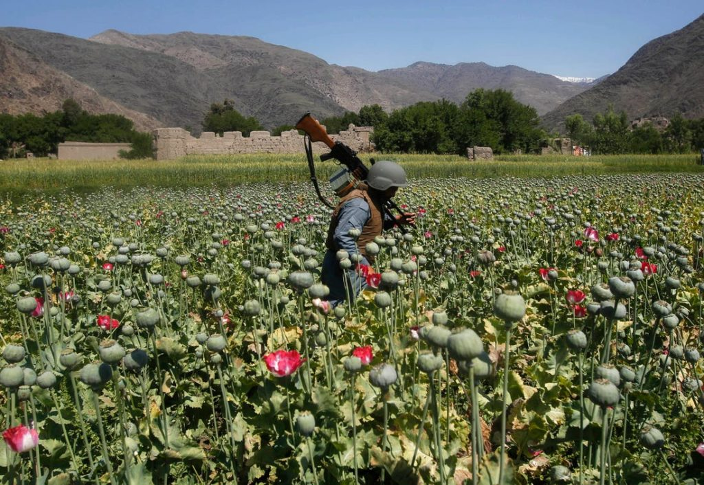 Biggest Setback for Pakistan: Ashraf Ghani to crackdown on Opium Production and ending Pakistan Supported Taliban Terrorists source of Revenue