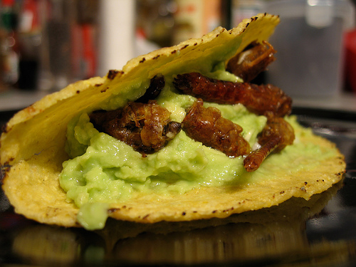 Locust tacos in Mexico (courtesy of blogjam on Flickr)